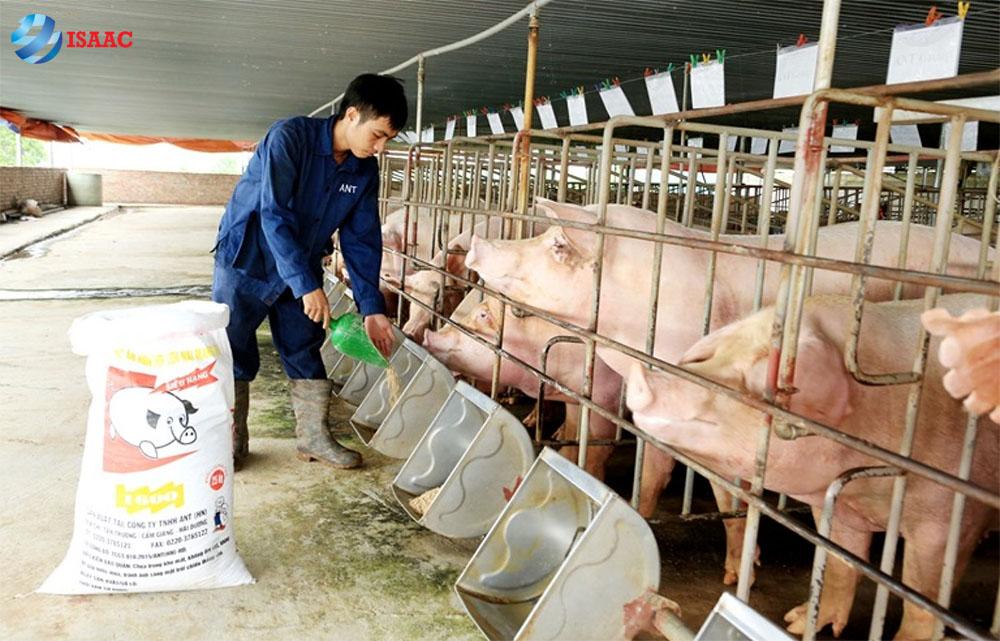 mở xưởng sản xuất chăn nuôi