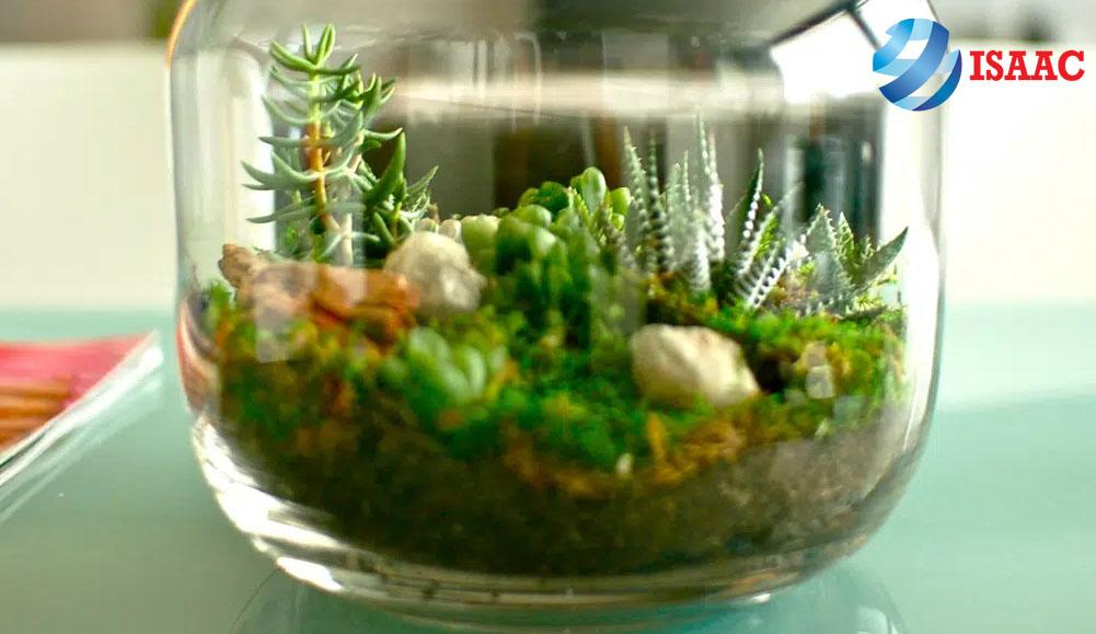 hệ sinh thái thu nhỏ trong thủy tinh