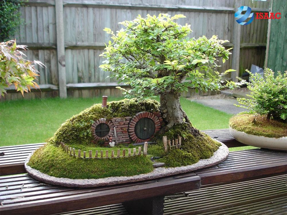 kinh doanh cây cảnh bonsai